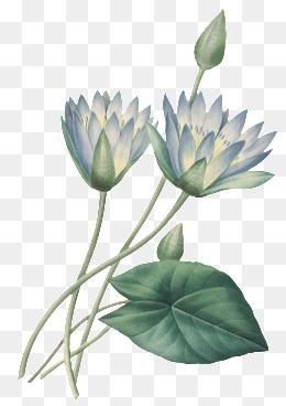 手绘水彩花卉