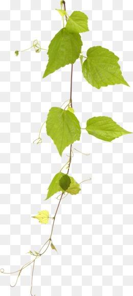 花丛藤蔓植物ps素材