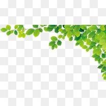绿色树叶边角装饰