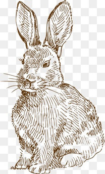 兔子手绘素描素材图片免费下载 高清装饰图案psd 千库网 图片编号