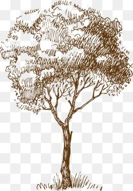 橘子手绘素描素材图片免费下载 高清装饰图案psd 千库网 图片编号1454228