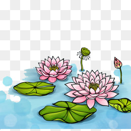 荷花图片手绘水彩笔画-免费下载 手绘水面图片大全 千库网png