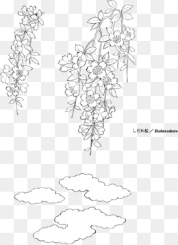 【手绘桂花素材】_手绘桂花图片素材大全_手绘桂花_千