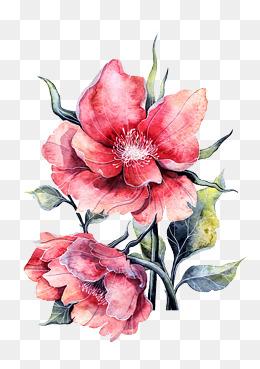 透明花壁纸图片素材