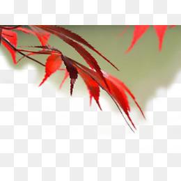 美丽的红色枫叶素材图片免费下载_高清psd_千库网图片