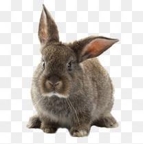 可爱呆萌兔