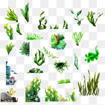 各种海藻素材