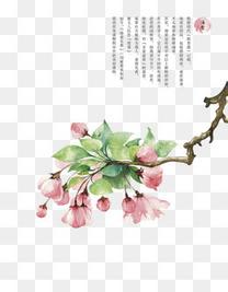 粉红色海棠花