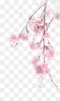 樱花png元素素材图片免费下载_高清图片pngpsd_千库网(图片编号7789793)