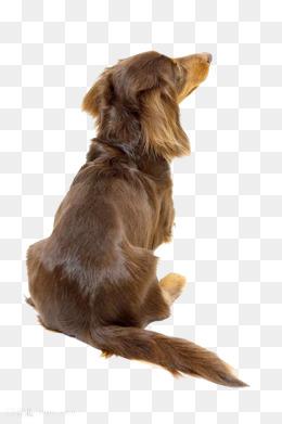 369宠物网_【宠物狗素材】_宠物狗图片大全_宠物狗素材免费下载_千库网png