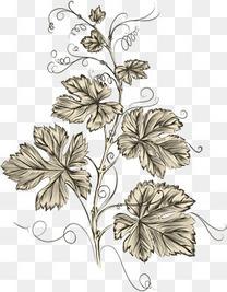 素描玫瑰花丛_精致的素描玫瑰花素材图片免费下载_高清psd_千库网(图片编号8360059)