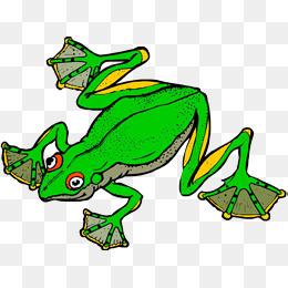红色皮肤牛蛙图片
