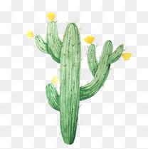 手绘水彩小清新黄色花朵仙人掌植物装饰