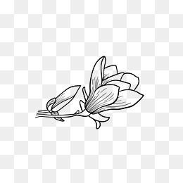 盛开的桃花简笔画
