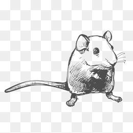 创意绘画设计老鼠图片