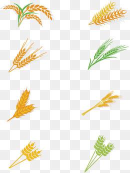 可爱手绘小麦仁卡通矢量图