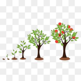 苹果树成长过程图片_【生长过程素材】免费下载_生长过程图片大全_千库网png