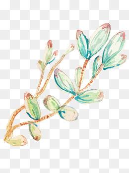 小清新手绘多肉植物设计元素