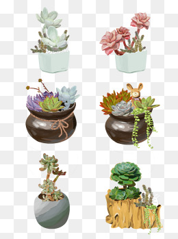 手绘清新多肉植物插画设计合集绿植盆栽清晰原创商用元素