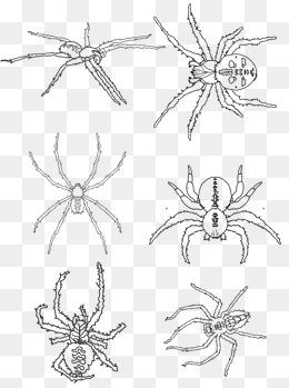 手绘万圣节蜘蛛矢量黑白线描蜘蛛可商用图片