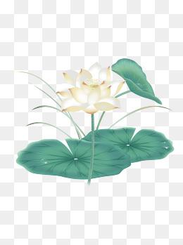 黄色手绘清新水墨插画植物荷花荷叶中国风