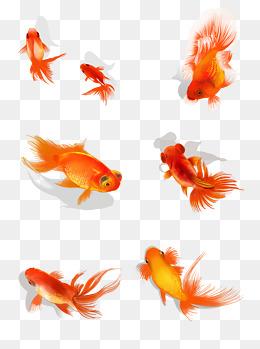幸运红色锦鲤金鱼水彩手绘手账本