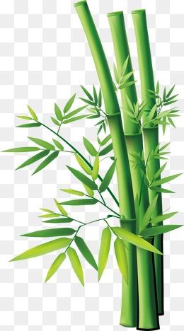 Fiche Technique Tracteur Tondeuse Branche Bambou