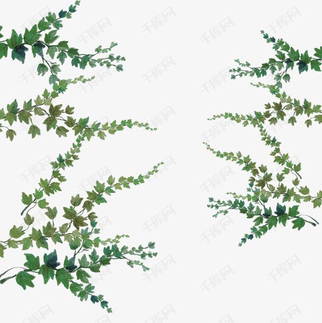 手绘绿色景观爬山虎植物的素材免抠png装饰图绿色景观绿色植物小清新爬山虎唯美手绘植物矢量简约绿色藤蔓