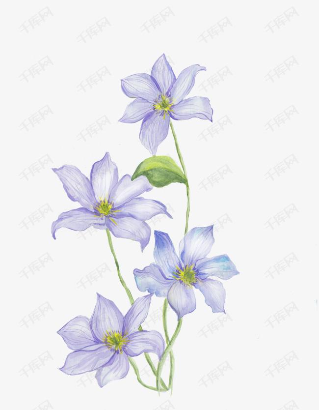 手绘淡紫色桔梗花素材图片免费下载 高清png 千库网 图片编号9279037