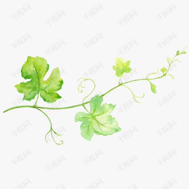 手绘绿叶花藤装饰素材图片免费下载 高清png 千库网 图片编号10837335