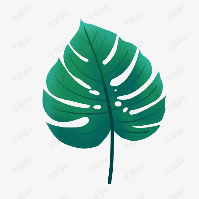 树叶热带植物  龟背竹矢量图  手绘龟背竹  写实叶子