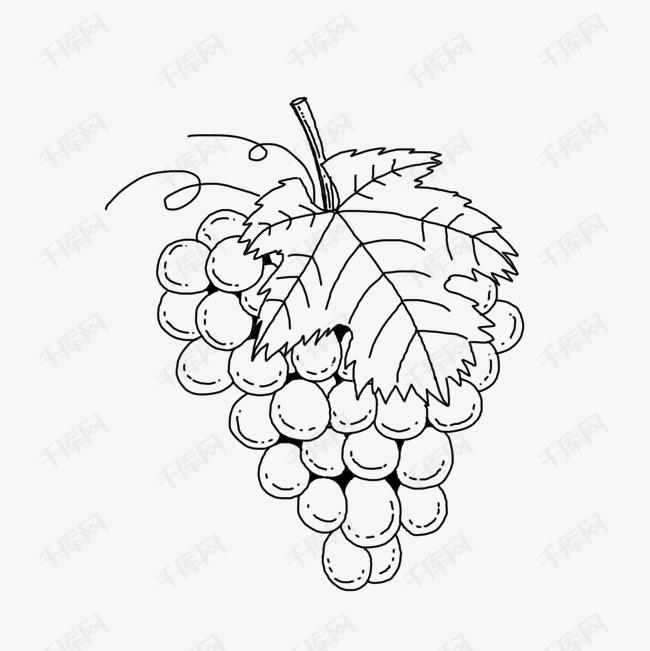 手绘线稿水果葡萄素材图片免费下载 高清卡通手绘psd 千库网 图片编号7878394