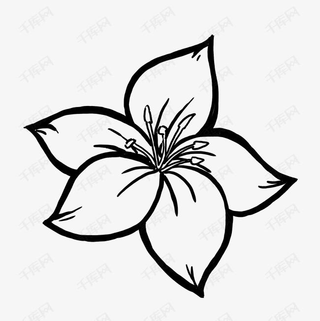 黑白花朵手绘线条