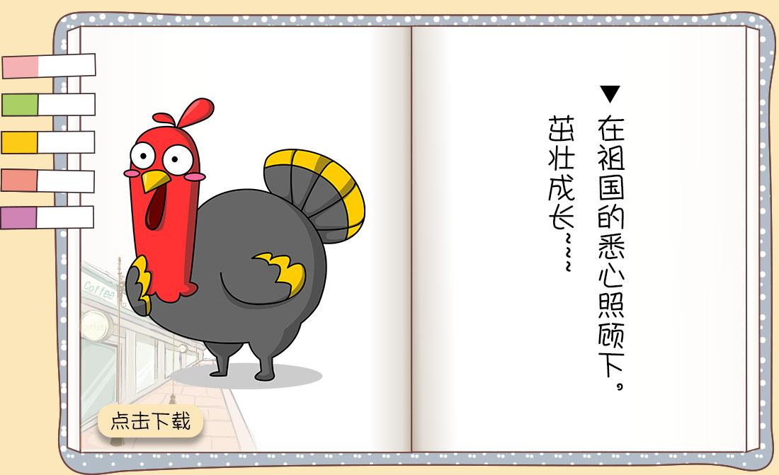 一只鸡的一生_03.jpg