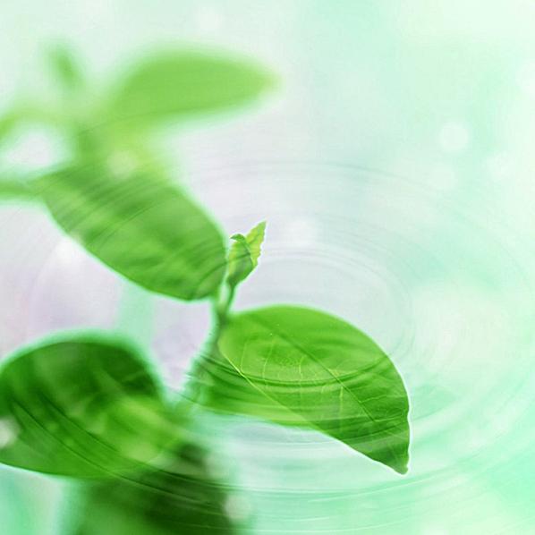 绿色自然 清新淡雅 文艺 简约 风景