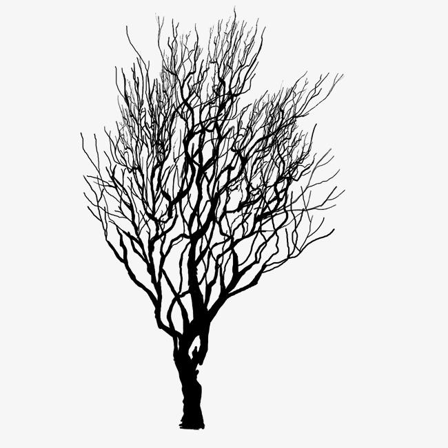 枯树枝和小鸟素材图片免费下载 高清png 千库网 图片编号9068093