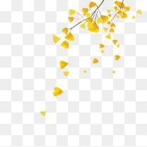 秋分白露银杏叶飘落