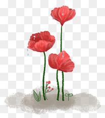 重阳节红花茱萸虞美人手绘
