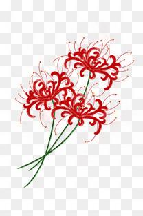 水彩手绘插画花卉彼岸花曼珠沙华