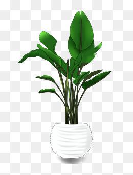 手绘盆栽绿色植物png图案