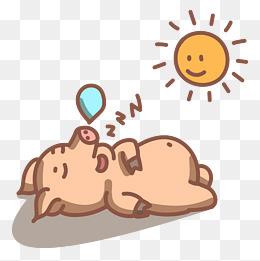 太阳下睡觉的小猪图片