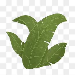 春天锯齿状叶子绿植
