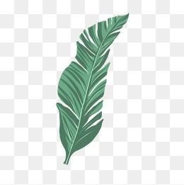 棕榈树叶子装饰插画图片
