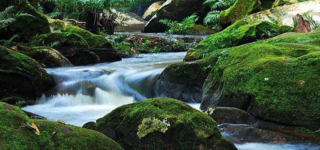 森林中的小溪