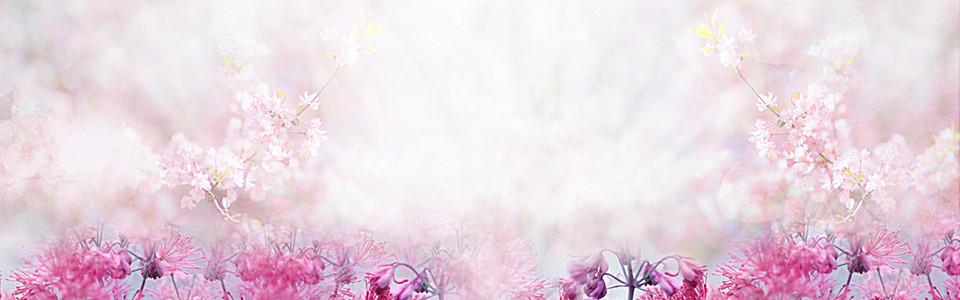 紫色植物花卉场景图