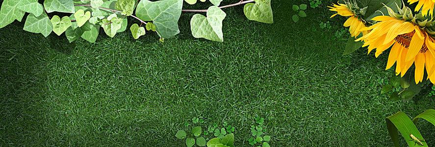 向日葵草地海报背景