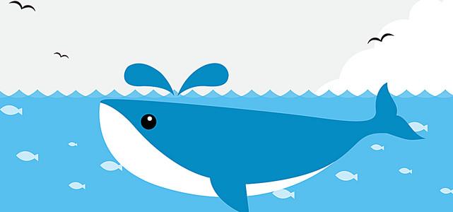 小海豚背景banner