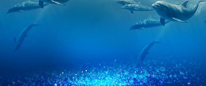 海豚海底66