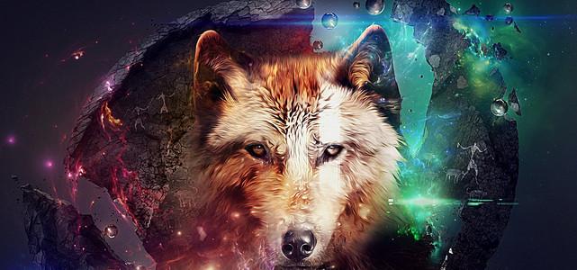动物狼背景