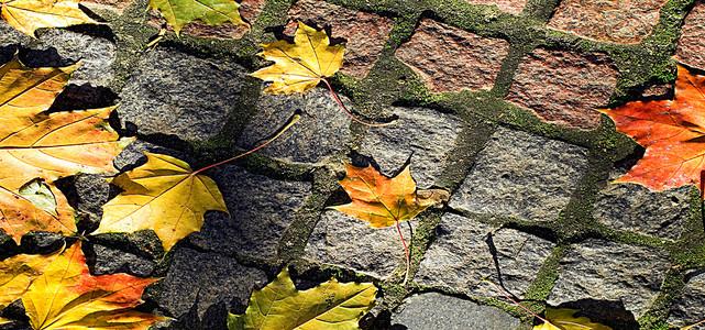 秋天飘落在地面上的枫树叶